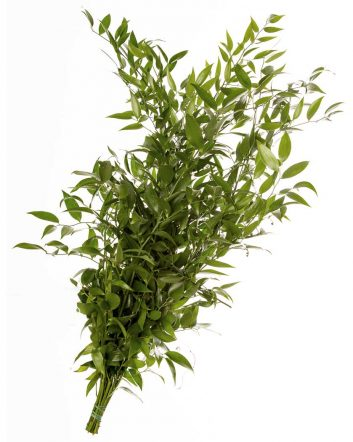 Italian Ruscus 80cm (5 Stem Bunch)