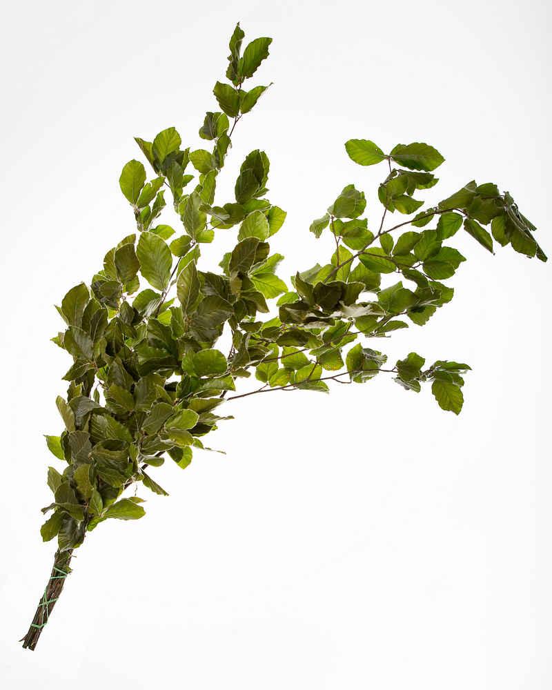 Beech Green