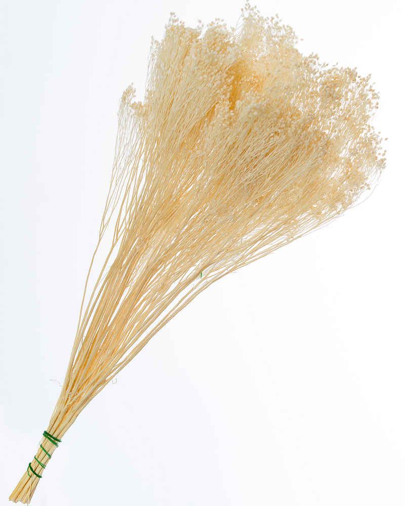 Broom Bloom Sbiancato
