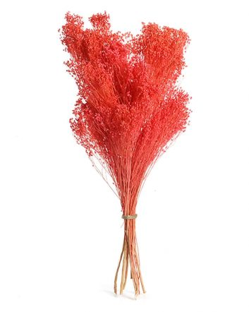 Red Broom Bloom