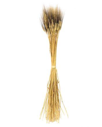 Ears Of Wheat – Black Mustache