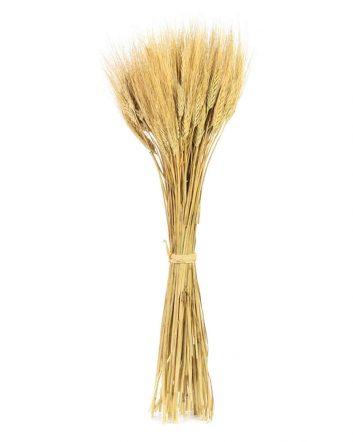 Ears Of Wheat – White Mustache
