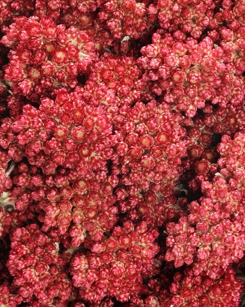 Natural Red Elycrisum