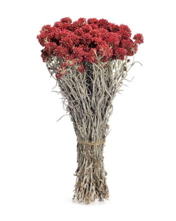Natural Red Elycrisum