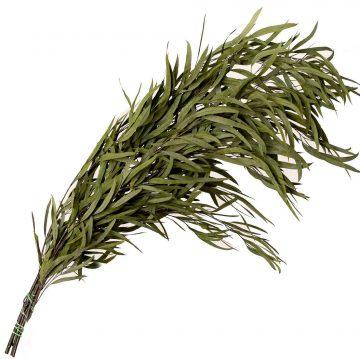 Eucaliptus Nicoly - Green