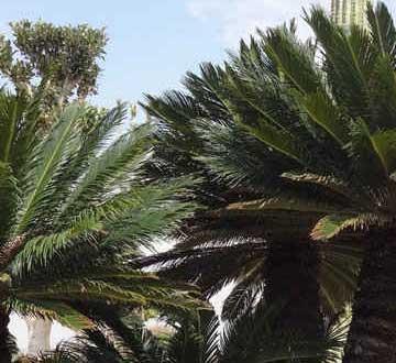 Specimen and Rare Trees